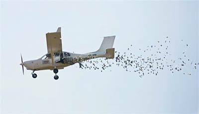 avion contra la crisis