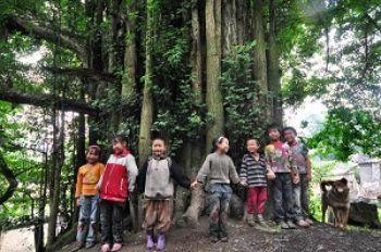 Niños de una villa loca en el condado de Changshun, juegan bajo el fósil viviente un antiguo árbol de Ginkgo. Foto:The Epoch Times