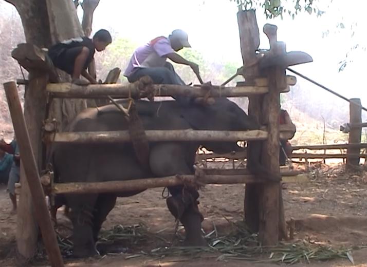 ntd-elephant-tourism-phajaan-2