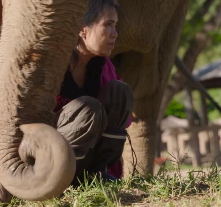 ntd-elephant-tourism-phajaan-4