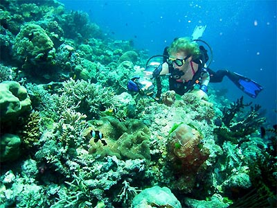 coral_wall