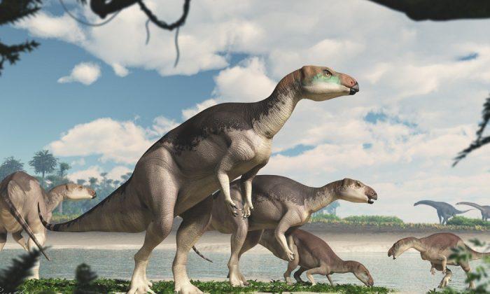 fostoria-dinosaur-lightning-ridge-700x420